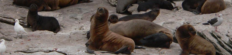 Cliff Island Sub Antarctic Island